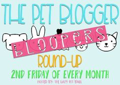 Pet Blooper Reel #2