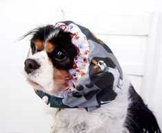 Cavalier King Charles Spaniel Dog Snood / by daydogdesigns on Etsy, $10.00