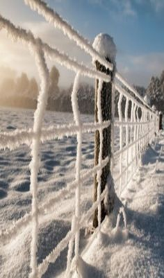 Frozen Snow On The Fence