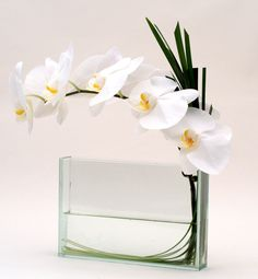 Modern Flowers Delivered in NYC. Local Florist with Same Day Delivery Service in New York (Manhattan and Brooklyn). White Phalenopsis orchid with a grass loop. Visit us at www.GabrielaWakeham.com/online_shop.php or call us +1(917)254-7234