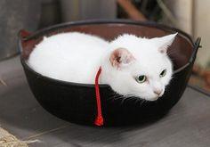 Twitter / nekozamuraiinfo: 【ドラマ版脚本:黒木久勝】久太郎を筆頭に、愛すべき面々、そして可愛すぎる猫たち。この際、スリルとかリアルとか、小難しいことは置いといて、週に一度の30分、ひたすら癒されてください。それが、猫侍の「お・も・て・な・し」#猫侍 Neko, Adorable Animals, Cats And Kittens, Cups, Cats, White Cats, Cat Love, Mugs, Cute Animals