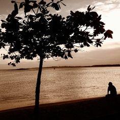 Praia de Meaípe, município de Guarapari (ES), por Maristela Ciarrocchi  #Brasil #Brazil #EspiritoSanto #Guarapari #Meaipe #praia #beach #natureza #nature #paisagem #landscape #three #arvore #photo #fotografia #picture