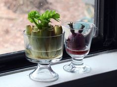 7 Plants You Can Start From Kitchen Scraps❤️ http://likes.livedan330.com/7-plants-you-can-start-from-kitchen-scraps