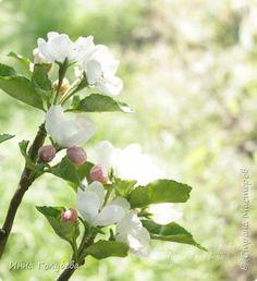 Девочки,заказали мне еще три веточки яблони и я решила отснять как я делаю листики и собираю веточки,хотя бы вкратце) Может новичкам пригодится мой опыт. фото 30 Clay Flowers, Sugar Flowers, Biscuit, Cold Porcelain, Flower Tutorial, Gum Paste, Diy Projects To Try, Polymer Clay, Plants