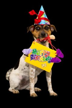 Happy Birthday pic Happy Birthday Pictures, Happy Birthday Wishes, Birthday Greetings, Birthday Cards, Sadie, Texts, Gift Ideas, Christmas Ornaments, Holiday Decor