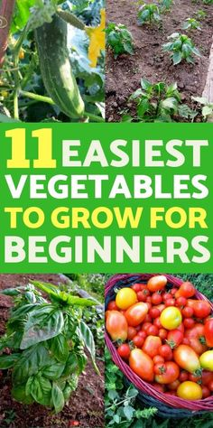 , Vegetable Gardening for Beginners: Learn which are the easiest vegetables to grow if you are a beginning gardener, plus guides on how to grow each of . , Vegetable Gardening for Beginners: Learn which are the easiest vegetables to gro. Growing Vegetables In Containers, Easy Vegetables To Grow, Organic Vegetables, Fruits And Vegetables, Veggies, Easy Plants To Grow, Vegetables Garden, Succulent Containers, Organic Fruit