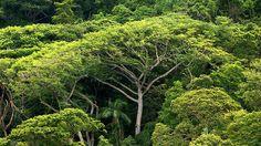 """Den genauen Fundort der """"Weißen Stadt"""" im Urwald Honduras halten die Forscher noch geheim."""