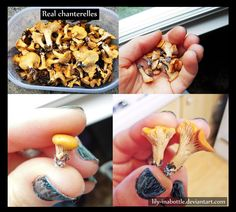 Polymer Clay Chanterelles by lily-inabottle.deviantart.com on @DeviantArt