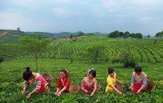 China Puer Tea Exhibition Garden