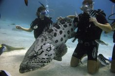 Mark & myself diving the Great Barrier Reef - Osprey reef (Amazing)