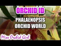 Phalaenopsis Orchid World - YouTube