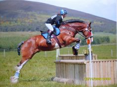 Clydesdale stallion Baremuir Superior proves that it's not just the Thoroughbreds that shine on the cross country course.