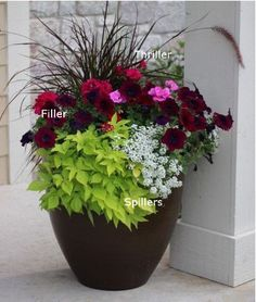 Explore stunning color combinations and practical planting advice with these 12 flower pot ideas for your front porch container gardening! Container Flowers, Flower Planters, Container Plants, Potted Plants Patio, Outdoor Plants, Outdoor Pots And Planters, Pot Plants, Outdoor Flowers, Container Gardening Vegetables