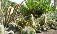 "Jardin Canario, Canary Islands    These tiny islands, off the northwest coast of Africa, are home to a number of fascinating plants, the Jardín Botánico Canario Viera y Clavijo is home to a number of them. Of particular note is the ""Garden of Succulents and Cacti,"" home to over 10,000 plants."