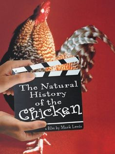 The Natural History of the Chicken Amazon Instant Video ~ Mark Lewis, http://www.amazon.com/dp/B004BUE9UW/ref=cm_sw_r_pi_dp_H5mqvb0C1DR9G