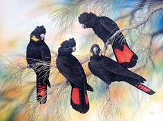 'Australian Glossy Black Cockatoos' by Lyn Cooke. Original Australian Art Card. Blank Inside for Your Own Message.
