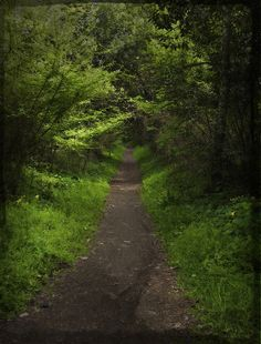 Path - Choupal forest, Coimbra, Portugal. We will be walking there with Coco one day soon.