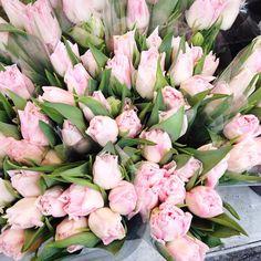 Flower love - Copyright Carla Coulson