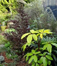 Schefflera soleil danger garden: My visit to the garden that inspires A Growing Obsession