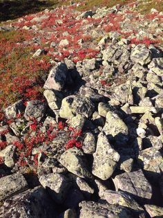 Rocks and colorful autumn time in Levi Ski Resort, Lapland, Finland.