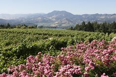 A private Diamond Mountain Wine Tasting Tours is a journey through northern Napa Valley to an area famous for its Cabernet Sauvignons and Cabernet Francs.