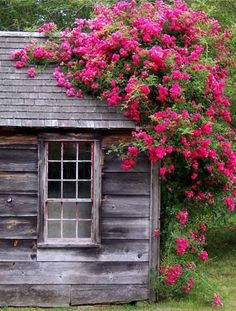 Roses On The Roof