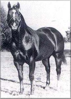 Sugar Bars | Sugar Bars ~ Quarter Horse Legend