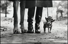 USA, NYC, Felix, Gladys, and Rover, 1974 by Elliot Erwitt