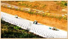 ※画像をクリックするとブログページが開きます。 川のブログ: 滝川流布 =流れゆく水の潤いの傍に、そしてその先へ= 『渋海川防災安全護岸工事20171211』 より関連イメージを引用しています。  #渋海川 #新潟 #長岡 #工事 #Nagaoka  #Niigata #Construction