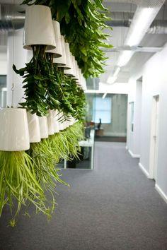 1000 images about office space indoor garden on pinterest indoor vertical gardens living - Hardy office plants ...