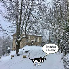 """""""I'm Nacho a year old mix border, I live in a small village of the Pyrénées, Ariège in South of France. I'm so happy to discover snow for the first time.""""  """"Je m'appele Nacho, croisé border de un an, j'habite un petit village ariégeois dans les Pyrénées. Je suis très heureux de découvrir la neige pour la première fois."""""""
