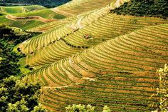Welcome to Douro Valley - North of Portugal Enjoy your holidays in Portugal Portugal Holidays, Douro Valley, Port Wine, Portuguese, Vineyard, Outdoor, Facebook, Country, Curves