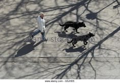 Image result for shadows from above
