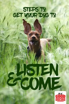 Get your dog to come when you call. If your dog won't come when called or if you have a dog that doesn't listen, check out this video with 5 step by step exercises to get your dog to listen, obey, and come when called. #dogs #dogtraining #puppytraining