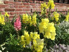 Neighborhood flowers