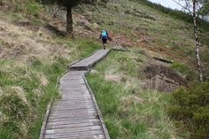 Hafren Forest walk i