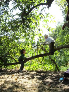 Wild Roots Forest School - Home