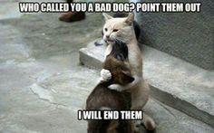 Good guy kitty