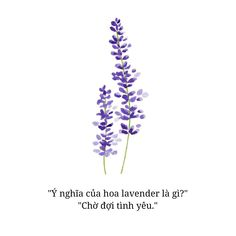 Ý nghĩa hoa Che Quotes, Status Quotes, Flower Quotes, Photo Quotes, Wallpaper Quotes, Captions, Lavender, Floral Quotes, Picture Quotes