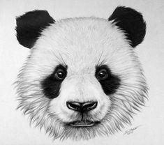 How to draw a realistic panda bear. Here's another tutorial video. Showing how to draw a panda bear. Tatto Panda, Panda Bear Tattoos, Easy Animal Drawings, Animal Sketches, Easy Drawings, Pencil Drawings, Panda Sketch, Bear Sketch, Cute Panda Drawing