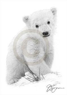 Arctic Polar Bear Cub pencil drawing print  A4 by GaryTymonArtwork