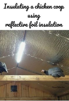 How to insulate a chicken coop quickly and easily using rolls of insulation and a staple gun.