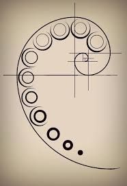 Fibonacci Tattoo on Pinterest | Nautilus Tattoo, Architecture ...