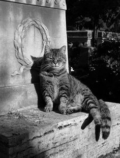 Interesting how many cats are photographed in cemeteries.