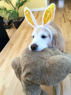 Easter Golden