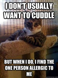 This always happens to me! Stupid cats.