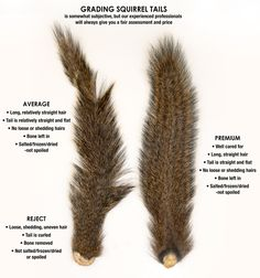 Hunters: Are you interested in selling your squirrel tails? At Mepps, we pay for quality squirrel tails. Help us recycle this valuable resource! Rabbit Hunting, Squirrel Hunting, Deer Hunting, Coyote Hunting, Hunting Crafts, Hunting Tips, Hunting Stuff, Camping Crafts, Best Fishing