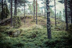 Viitankruunun Hiidenkiuas Halikonlahdella sijaitsee pronssikautiset (1500-500 ekr.) muinaishaudat, Viitankruunut. Pronssikautiset kiviröykkiöt ovat pelkästään kivistä koottuja latomuksia ja niiden pohjassa on usein sisäkkäisiä kivikehiä joiden välissä voi olla joko ruumis- tai polttohautauksia. http://www.naejakoe.fi/luontojaulkoilu/viitankruunun-hiidenkiuas/ #hiidenkiuas #muinaisröykkiö #salo