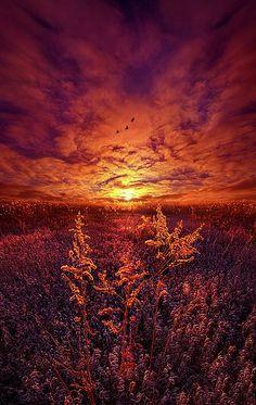 Flameante horizonte que cubre la pradera de un tono carmesí hasta donde alcanza la vista.