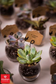 Cute guest place card ideas, succulents, organic natural sweet wedding ideas,  Tyler Arboretum Wedding Photographers Creative-29
